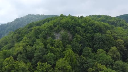 boxwood : Aerial view. The top of the mountain is covered with trees. Stock Footage