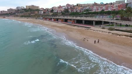 plage : Aerial view of Tarragona beach in winter. Dog walking on the beach. Stock Footage