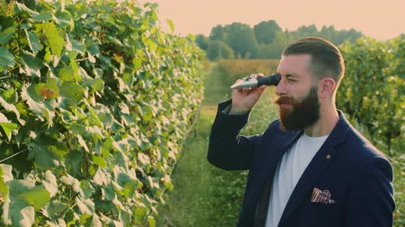 viticultura : Man on vineyard with refractometer standing on green vineyard