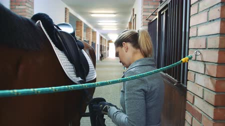harness : Young woman preparing horse for training and fixing saddle on back standing in stable.