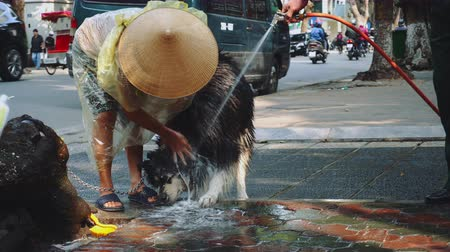 vietnami : Shot of Asian women washing his dog in the street in Hanoi, Vietnam Stock mozgókép