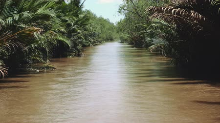 mangue : Mekong River in Vietnam, South East Asia