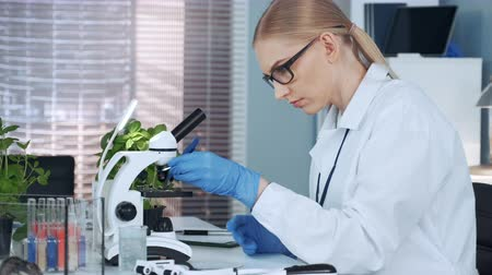 pinça : Female chemistry professor using tweezers to put organic material on slide and look under the microscope. Woman working in modern well equipped laboratory