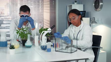 pipet : Black research scientist dropping chemical liquid on plant leaf and then giving it to the hamster. She is surprised with the course of the experiment in chemistry lab. Stok Video
