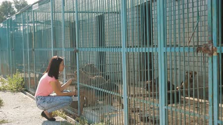 cur : Girl volunteer in the nursery for dogs. Shelter for stray dogs