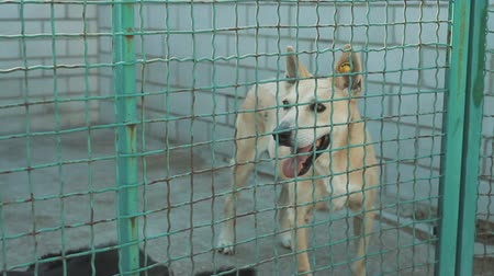 cur : Homeless dog behind bars in an animal shelter Stock Footage