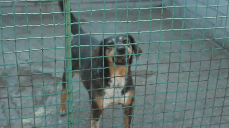 animal protection : Homeless dog behind bars in an animal shelter Stock Footage