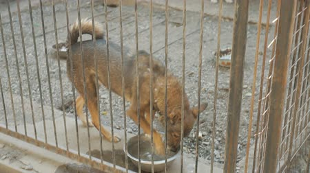 cur : Shelter for stray dogs