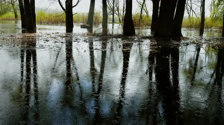 Flood river flow, spilled forest trees