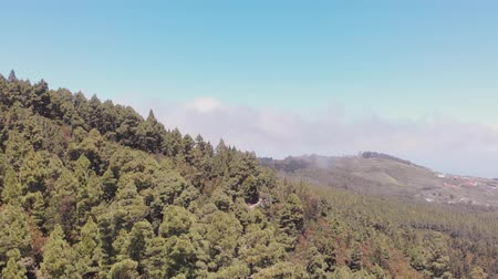 légköri : Panoramic view from drone - Tenerife: forest, valley and ocean Stock mozgókép