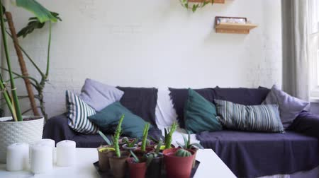 projetado : Relaxation area in the apartment with a beautiful soft sofa and a coffee table with home plants
