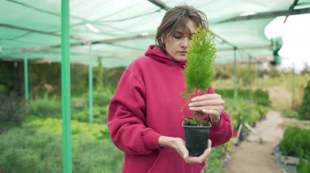 preslenmiş : Woman florist checks a beautiful green seedling in a greenhouse outdoors. Control and research of plants in botany Stok Video