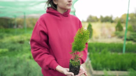 presleme : Botany. Young woman scientist holding a green thuja seedling in her hands. Love for nature and the environment. Agriculture, local business