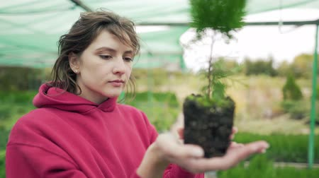 прессованный : Florist inspects the plant. Control and verification of seedlings. Biologist studies the root of an evergreen seedling