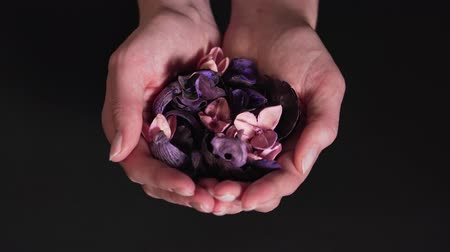 Aromatherapy - beautiful dry flowers in womens hands isolated on a black background. Natural medicine and natural therapy. Close-up Wideo
