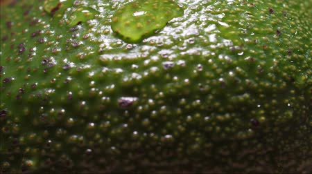 A drop of water drains over a fresh avocado, a macro static shot. Green vegetable extreme close-up, avocado peel. Vegan Diet, Healthy Lifestyle