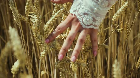 Impressive view of a young womans hand, which touches upon the spikes of ripe Stock Footage