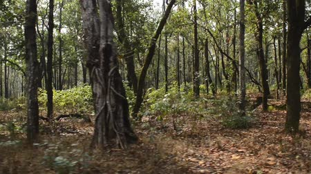 ranthambore national park : forest landscape in national park in India