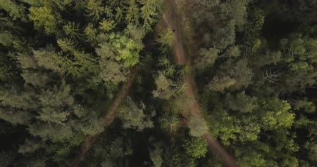 Aerial drone view of forest from the sky, above trees and roads. Russian landscape with pines and fir, sunny day in wild nature Стоковые видеозаписи