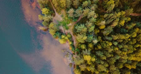 cam : Aerial drone top view of forest and coniferous trees in the north. Russian landscape with pines and fir, sunny day in wild nature. The Gulf of Finland. Baltic Sea. Concept for traveling tourists.