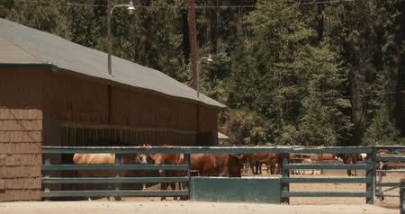 Horses in Mountain Stable 2