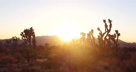 Joshua Tree National Park Sunset Time Lapse, Scenic Landscape, California Desert
