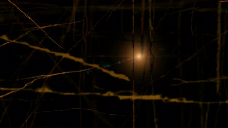 Trembling branches and strange lights at night. Dark woods with light flare. Spooky forest, mysterious effect. Halloween background concept. Animation, abstract illustration, seamless loop