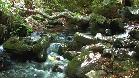 ida : Running water in a forest stream