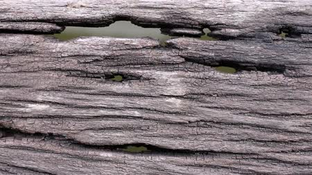 serra : Old wooden floor with holes and water background