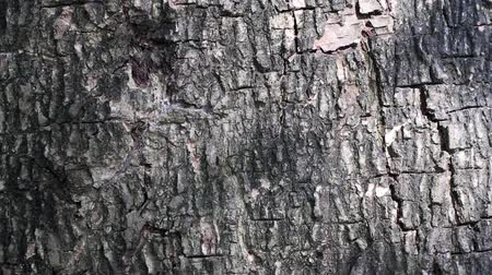 контрасты : Abstract beauty in nature. Dark shadow of moving leaves against a lighter background of tree bark. Стоковые видеозаписи