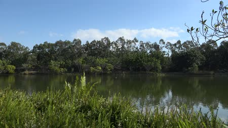 Квинсленд : Springfield Lakes in Ipswich City, Queensland, Australia during the day.