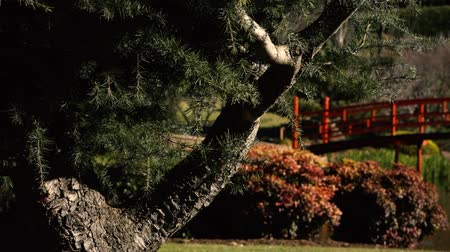 darling : Japanese Gardens in Darling Heights, Toowoomba, Queensland on a beautiful sunny day.
