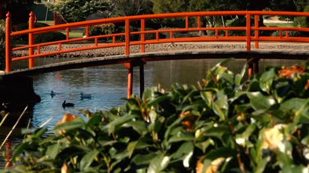 sevgili : Japanese Gardens in Darling Heights, Toowoomba, Queensland on a beautiful sunny day.