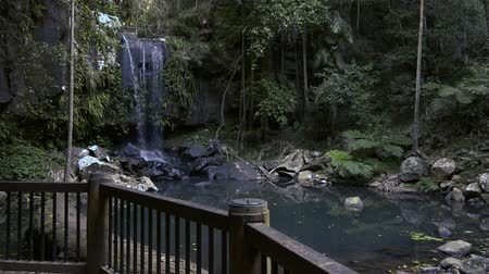 нетронутый : Curtis Falls waterfall located in the Joalah Section of Tamborine National Park which is apart of the Gold Coast Hinterland, Queensland. Стоковые видеозаписи