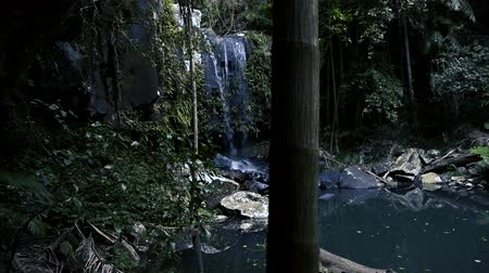 pristine : Curtis Falls waterfall located in the Joalah Section of Tamborine National Park which is apart of the Gold Coast Hinterland, Queensland. Stock Footage