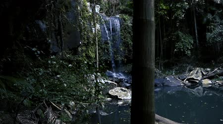Curtis Falls waterfall located in the Joalah Section of Tamborine National Park which is apart of the Gold Coast Hinterland, Queensland. Stock mozgókép