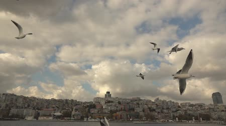 Seagulls Flying in a sky Stok Video