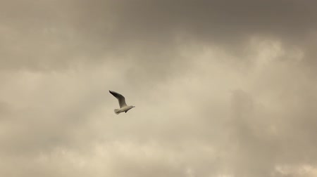 glides : seagull flying in a cloudy sky