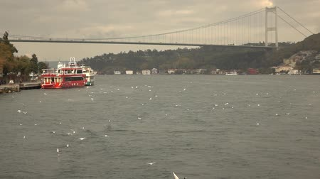 sea bird : Bosphorus Bridge Turkey Istanbul