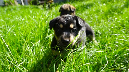 щенок : mongrel puppy on grass