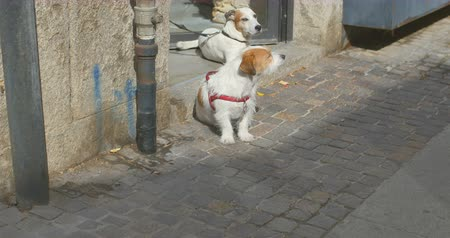 stray dog : Two dogs is waiting for its masters near boutique
