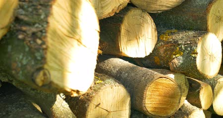 section : Chopped firewood at the sunny garden