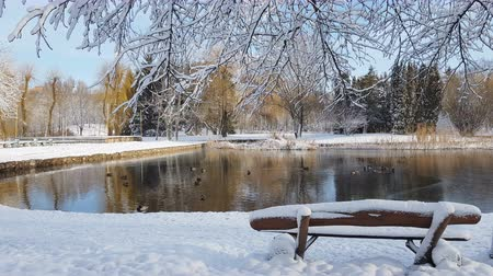 First snow in the city park with ducks on an icy pond and a bench covered with snow Vídeos