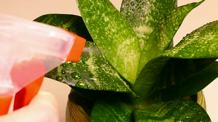 runoff water : Watering and tending plants, Slow Motion Video clip