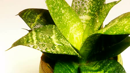 runoff water : Watering plants in close-up in slow motion, Slow Motion Video clip