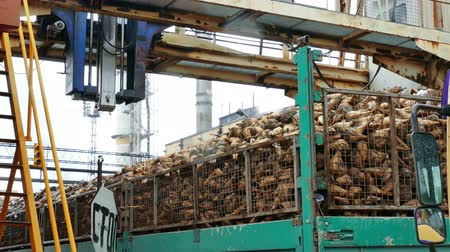 Processing of sugar beet in a factory facilities, 4 K Video Clip