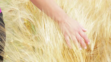 чувствовать : Woman walking and touching the golden wheat with her hand Стоковые видеозаписи