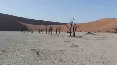 namibya : beautiful sunrise landscape of hidden Dead Vlei in Namib desert with blue sky, this is best place in Namibia