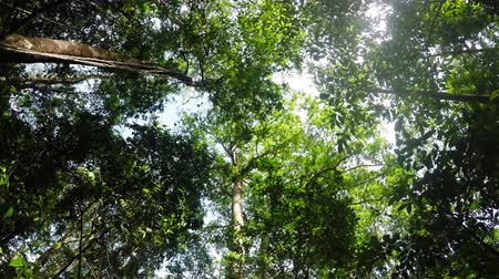 chuva : Wide ground view of treetops in the rain forrest north Sulawesi, Indonesia Vídeos