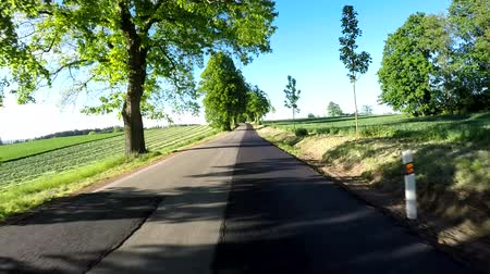 previously : Car drive in sunny day between countryside and meadow. Landscape with trees and blue sky with sunlight. 60 FPS POV view